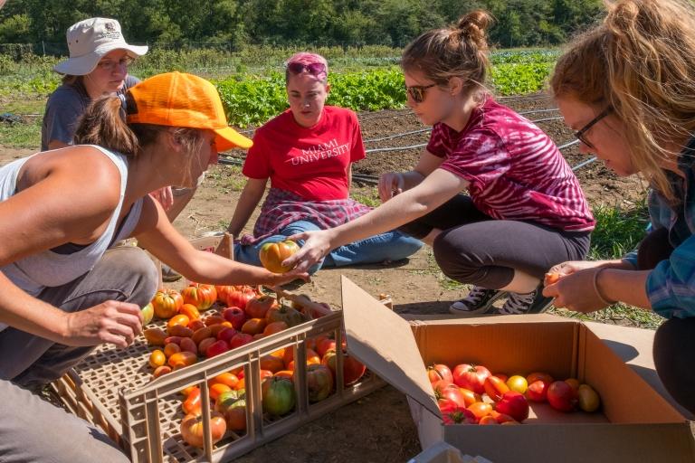 K5517 Food Institute Students Harvesting Food